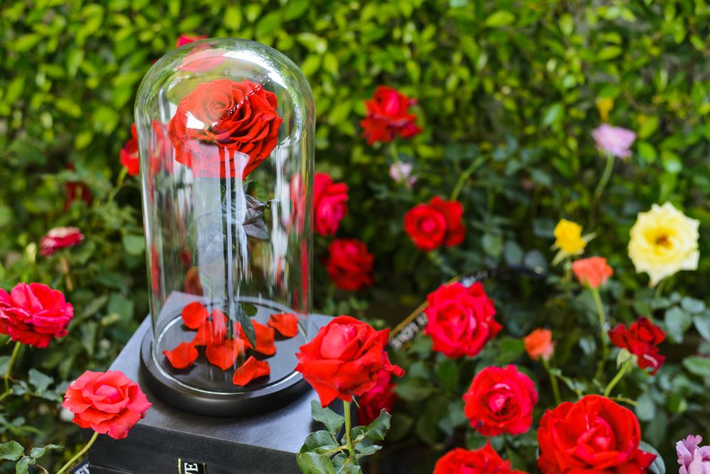La rose éternelle, le cadeau glamour
